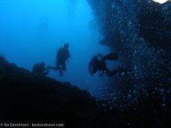 BD-060413-Pescador-Island-4131134-Homo-sapiens.-Linnaeus.-1758-[Diver].jpg